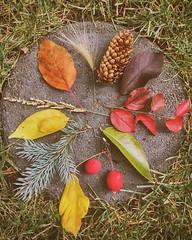 #fall #autumn #leaves #TagsForLikes #falltime #season #seasons #instafall #instagood #TFLers #instaautumn #photooftheday #leaf #foliage #colorful #orange #red #autumnweather #fallweather #nature (edgui) Tags: fall autumn leaves tagsforlikes falltime season seasons instafall instagood tflers instaautumn photooftheday leaf foliage colorful orange red autumnweather fallweather nature