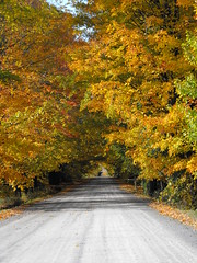 Foliage Lane in the Eastern Townships (pegase1972) Tags: qc québec quebec canada estrie easterntownships nspp fall foliage autumn automne getty licensed exclusive explore explored