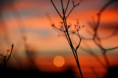 6/365 (Nana Blackseven) Tags: blue sunset red orange naturaleza plant flores macro planta nature sunshine fauna night atardecer fire amanecer