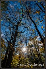 Dans le sentier de la forêt ancienne (Loupin101) Tags: temp lieux autre montwright promenadesetrandonnées montwright13octobre2012