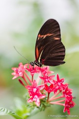 Butterfly (Thelma Gatuzzo) Tags: flowers flores nature birds june butterfly florida natureza ngc insects npc 2012 butterflyworld blinkagain thelmagatuzzo