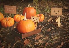 Pumpkin Picking at the Patch (.•۫◦۪°•OhSoBoHo•۫◦۪°•) Tags: autumn fall halloween weather wagon robot manga kawaii pumpkinpatch 2012 danbo amazoncojp minipumpkins pickingpumpkins revoltech danboard ダンボー yotsubai danbolove ourdailychallenge danbophotography toyintheframethursday amazoncardboardrobot danbopumpkin minipumpkinsfrommykitchen themakesuchsweetdecorations