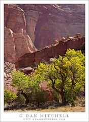 Cottonwood Trees and Sandstone Cliffs (G Dan Mitchell) Tags: park travel trees usa southwest green nature leaves america print landscape utah sandstone desert nps north stock scenic cliffs boulders capitol wash national cottonwood license gorge reef