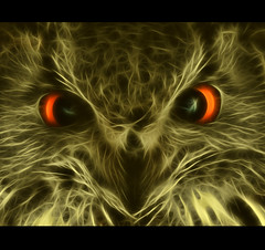 Bengal Owl (Steve Wilson - over 2 million views thank you) Tags: orange india macro bird closeup photoshop asian eyes nikon asia eagle indian raptor owl stare plugin fractal d200 staring bengaleagleowl bengal avian birdofprey eagleowl nikond200 fractalius