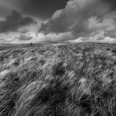 Fan Nedd I (Adam Clutterbuck) Tags: blackandwhite bw grass wales square landscape mono cloudy windy brecon beacons bandw grassland sq greengage nedd adamclutterbuck fraith showinrecentset fannedd fanfraith shoinrecentset