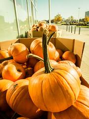 Pumpkins (My TVC 15) Tags: street pink blue light shadow orange sun ontario black london halloween gourds yellow dark bokeh pavement pumpkins symmetry line depthoffield nostalgia cracks asymmetry jackolanterns lightroompreset vintagepreset olympusomdem5 1250mmlens