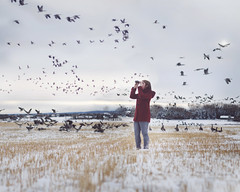 flying south (40/52) (Tasha Mare) Tags: winter red white snow canada cold girl field birds marie photography 50mm flying geese nikon 14 flock canadian jacket concept tasha d7000 thephotographyqueen tashamariephotography teapalm