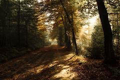 Autumn (Jovoorthan) Tags: autumn light sun mist art fall painting season ray colours herfst beam rays leafs sunbeam beams mystic myst mysth