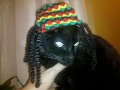 Hey Mon, Rasta Cat