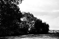 The Gate (Tinina67) Tags: autumn trees winter light bw cold field fence gate wiese hedge tina sw chill tinina67