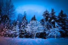 Whistler winter pics DSC_3682.jpg (PowderPhotography) Tags: blue winter light snow tree whistler dawn lights nikon skiing d70s fairy blackcomb