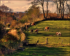 All quiet on the field. (gos1959) Tags: horses field rural pony wally thegalaxy jammerbugt gynther mygearandme mygearandmepremium pregamewinner biersted