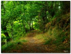 Paseando por Parada de Sil (Nati C.) Tags: naturaleza verde camino paisaje galicia ourense cruzadas ltytrx5 efectoorton cruzadatécnica paradadesil cruzadaii
