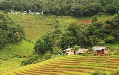 PhamonVillage-DoiInthanon-ChiangMai-Trip_By-P r i m t a a_E10886166-041