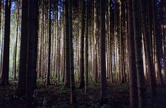 (xbacksteinx) Tags: morning trees light film analog forest 35mm early woods mood moody cheap lots pointnshoot c41 olympusmjuii dmparadies200