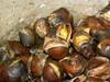 Quentes e boas!... (Rosario_Marques) Tags: portugal castanhas sãomartinho mundorural