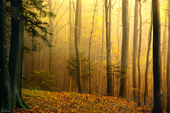 Last days of autmn (Robin Halioua) Tags: autumn forest switzerland enchantedforest robinhalioua