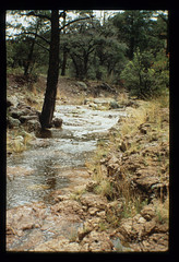 pine pool flood (Peloncillo Project) Tags: veg tre srb str grs lcn