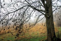 Birdy House (Sarah McKie) Tags: wild house color colour tree bird landscape photography box hdr birdy
