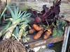 Fruits of the labours (Daniela Bowker) Tags: pentax x5 pentaxx5