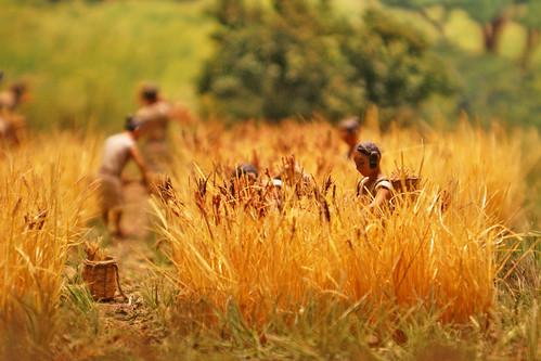 連綿と続く米への情熱 Perpetual Passion for Rice