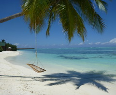 Meeru Island, Maldives (Carla Salter) Tags: ocean shadow colour beach indian swing palmtree maldives whitesand beachhuts meeru meeruisland