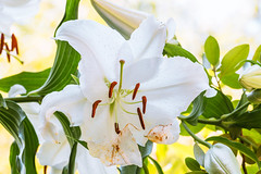 flowers (sal tinoco) Tags: white outside flower flowers pastel blossom plant polen fantasticflower