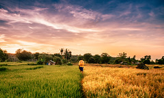 Early Morning Walk (syukaery) Tags: flores indonesia ntt travel nikon d750 nikkor 1635mm sunrise landscape