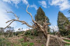 Old Wood (Myreality2) Tags: bushwalk hamilton newzealand waikato outdoor lakengaroto teawamutu nz tokina af 1116mm f28