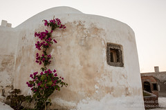 Flowers Creep up a Wall in Oia. Santorini, Greece