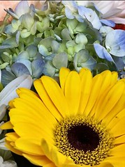 Pastel Blooms (Scorpiol13) Tags: floralarrangement softcolor blackeyedsusan yellowpetals flowers lightblue pastel paleblue hydrangea