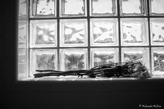 Rest (MichaelaSMillion) Tags: rest lay laying laid down flower flowers plant plants bouquet window grey black white light dark contrast contrasting contrasted dead dying die wilt wilted wilting beauty beautiful