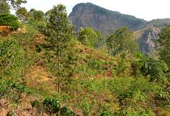 DSCN3790 (che1899) Tags: srilanka ella