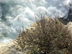 a strapiombo sul mare (fotomie2009 OFF) Tags: torredelmare sea mare rocce rocks liguria italy italia riviera ligure ponente