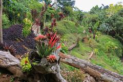 Princeville_Botanical_Gardens-9 (Chuck 55) Tags: princeville botanical gardens kauaihawaii kauai