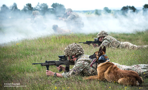 Military Working Dogs undergo Live Fire Tactical Training.