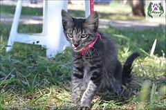 Ensaio Felino =';'= (lyanna.soares) Tags: felino felinos gato gatos gatinhos cat cats kitty kitties pet pets
