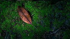 Monsoon (Vilvesh) Tags: monsoon nature weather kerala godsowncountry colors green leaves trees coconuttrees thrissur rain nikond750 nikon24120 nikon clouds monochrome bw travel traveller