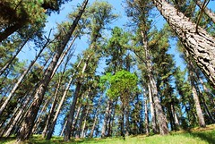 BOSQUE DE OMA (56) (cle68) Tags: bolunzulu kortezubi oma basondo santimamie bosque paisaje senderismo euskadi bizkaia urdaibai pinturas