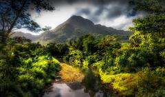 green acres (david t ruddock) Tags: green pacific samoa upolu