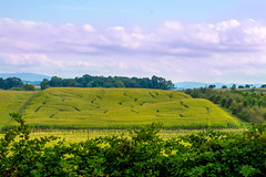 Life is a maze... (knoxnc) Tags: cornmaze i81 nikon va cloudyskies halloween d7200 farm cornfield mountains cornstalks sunlight