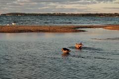 Pointes North (joeldinda) Tags: beach cloud gull waterfront pointesnorthresorthotel greatlakes water family nikon sky september bird duck 1039 nikond70 2005 d70 traversecity tc vacation michigan