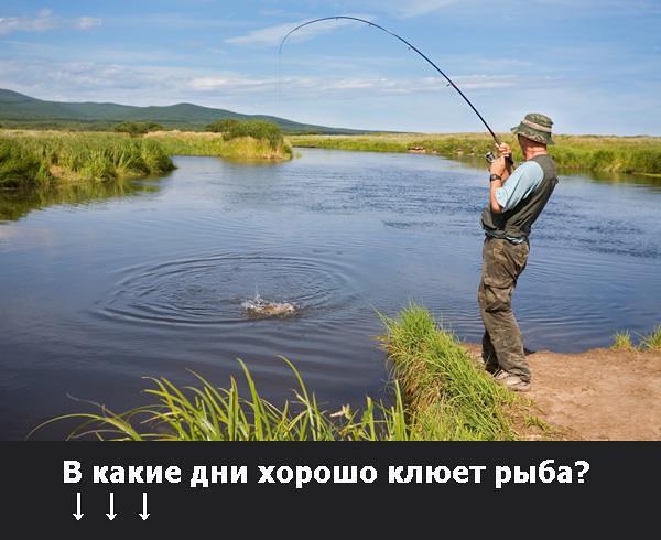 какая рыба клюет в начале сентября