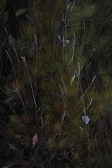 sept-1010570 (lebeaupinagnes) Tags: agneslebeaupin agnes lebeaupinagnes landscape myvatn automne mood north norduland northlife september iceland islande icelandic colours