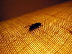 Fly (danieljsf) Tags: macro lamp bug insect fly 3waychallenge