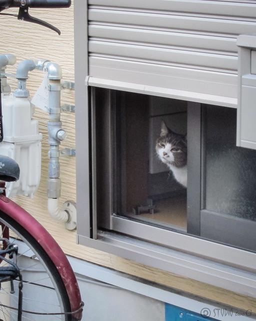 Today's Cat@2012-10-11