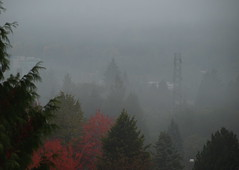 RISING MIST (ikan1711) Tags: morning autumn mist fall fog haze fallfoliage foliage shrouded morningmist fallcolours morningfog burnabybc fogrising autumnscenes risingmist shroudedinmist engulfedinfog colourfulfogscenes colourfulfoliage