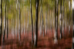 Vertical Panning Experiment #2 (JamboEastbourne) Tags: england forest sussex east panning friston veritical