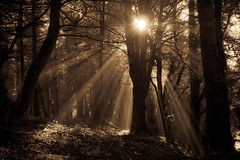 (Stewart Black) Tags: trees light sun woodland batch sony shafts beams radstock tyning a350