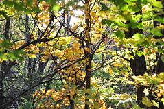 Fort du mont Saint-Hilaire (abdallahh) Tags: autumn canada fall nature forest automne qubec promenade mont fort    naturel  sainthilaire